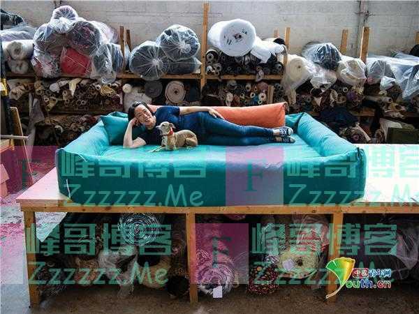 设计师推出豪华超大狗床 可容纳12只拉布拉多犬