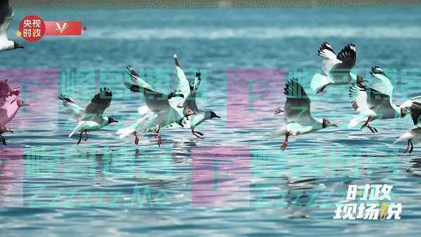 时政现场说丨保护青海湖生态 守护我们自己的家园