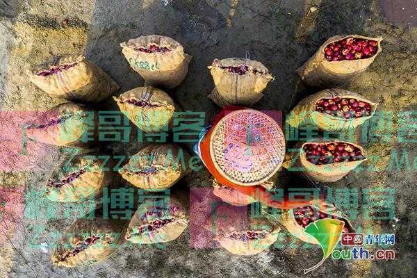 孟加拉工人冲洗分装红皮土豆 宛若置身红色海洋