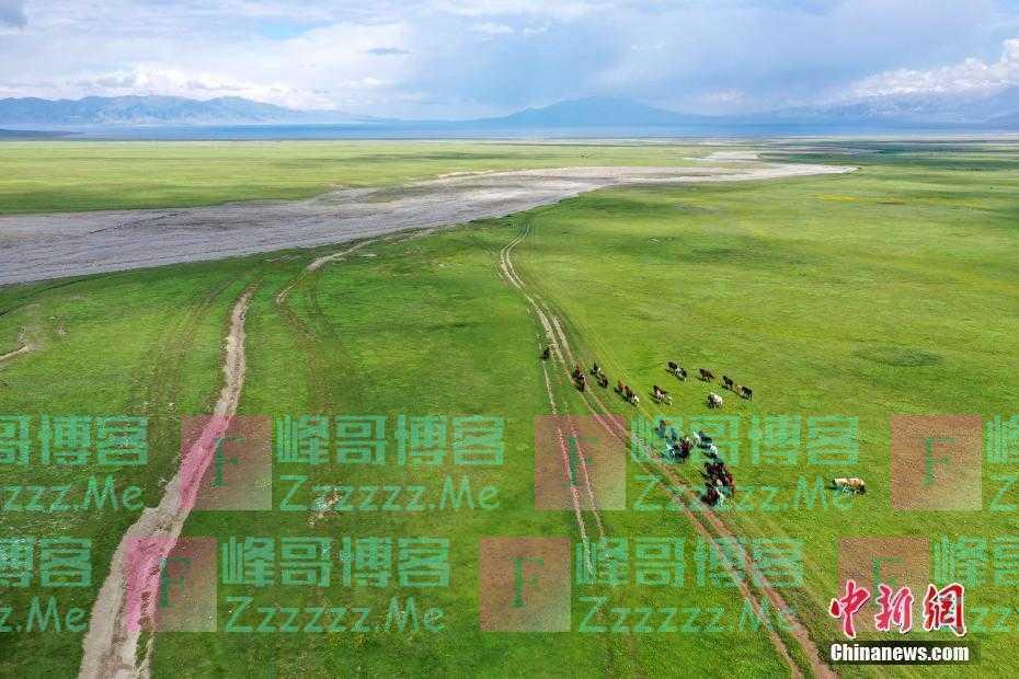 新疆博州:赛里木湖海西草原羊马成群