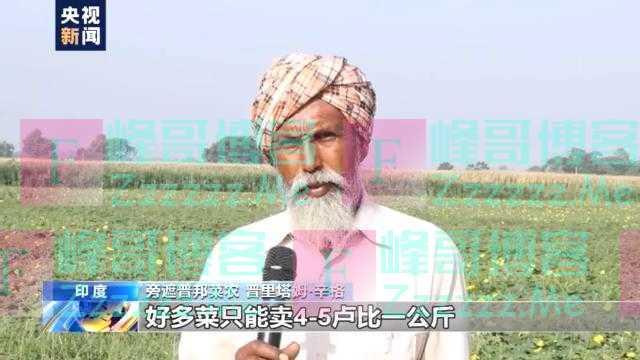 印度疫情致蔬菜运销困难 菜农被迫贱卖弃菜