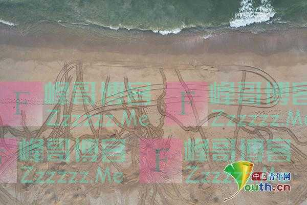 海龟沙滩埋蛋孵化 留下足迹好似车辙