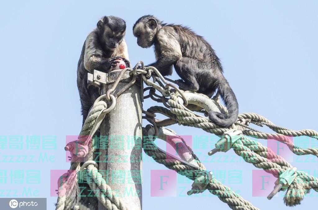 消夏降温有妙招 克罗地亚动物享用冰冻水果