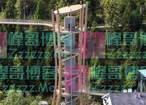 云游四方 在28米高的树冠间穿梭,世界最长的树顶步道今夏开放
