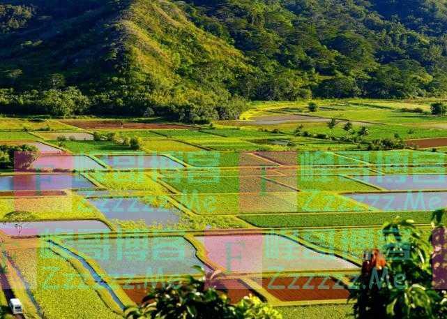 美媒:美国拟扩大打压中企投资,已将目光投向农业领域