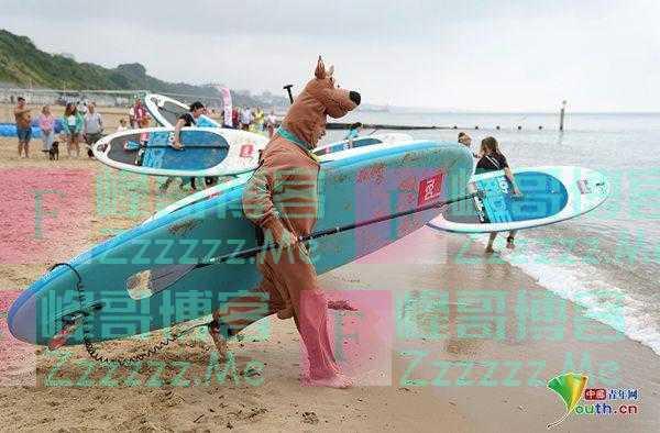 """英国举行狗狗冲浪和桨板锦标赛 主人打扮成""""汪星人""""配合爱宠"""