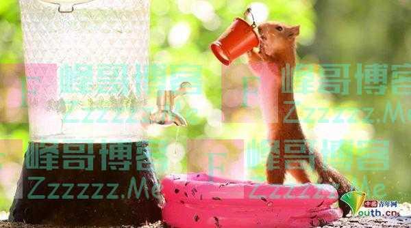 """瑞典红松鼠夏日""""消暑大作战"""" 吃冰淇淋泳池戏水萌萌哒"""