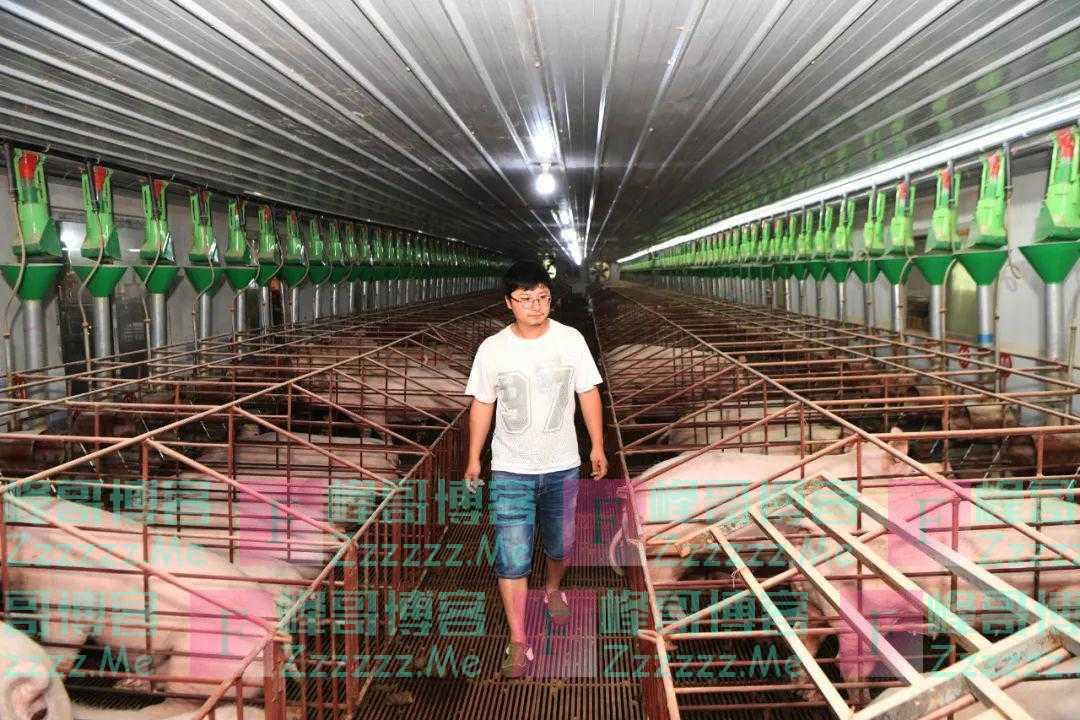 猪肉价格下跌,更要抓好稳价保供