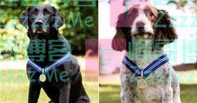 两只警犬获动物界大英帝国勋章 曾在警队服役6年