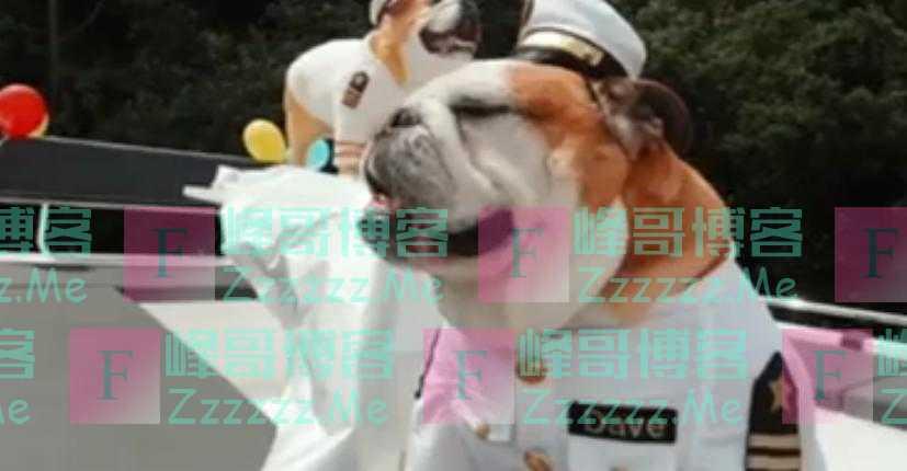 英国夫妇花3000英镑为宠物狗庆生 专门租了一艘船