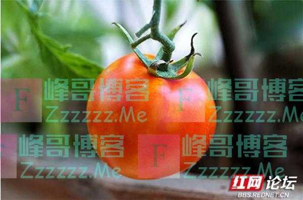 最美阳台|中国人到底有多热爱种菜?瞅瞅阳台就知道