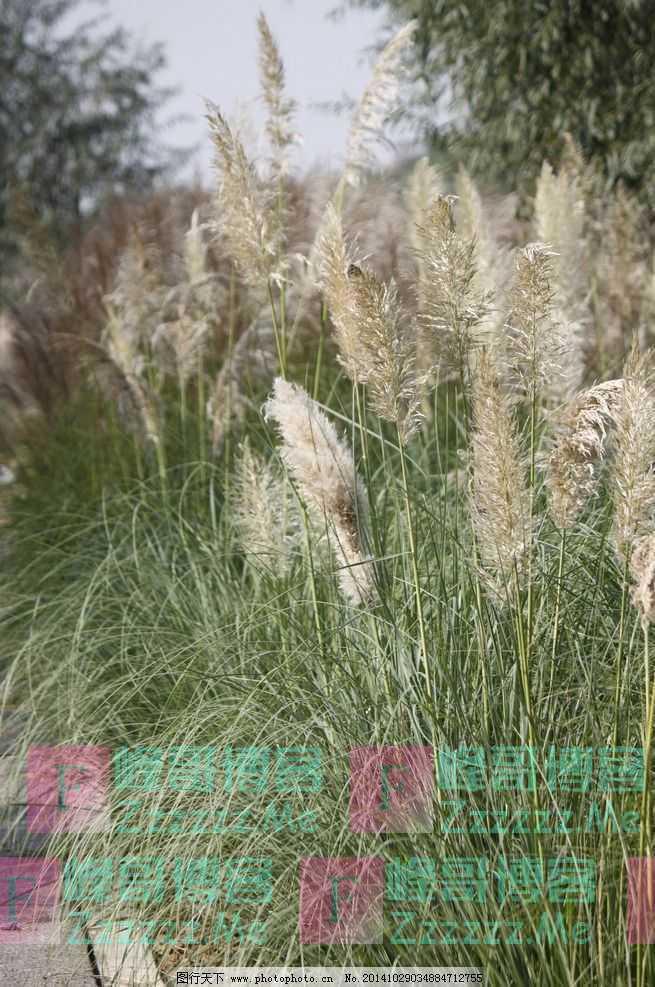 青未了/一颗无名的小草真的属于秋天(外一首)