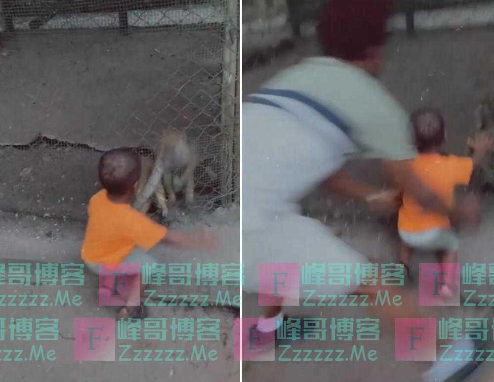 两岁男童在动物园喂猴子 被猴子抓住衣服拉到围栏上