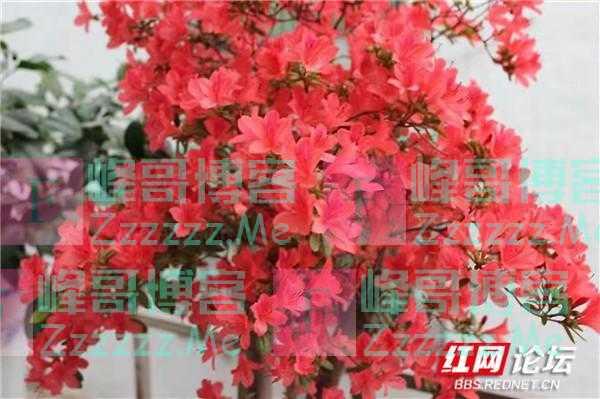 最美阳台丨花团锦簇的阳台,折射出我们的家和万事兴