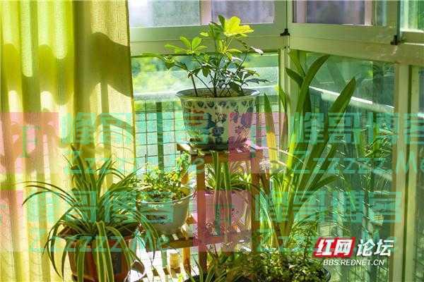 最美阳台丨心安宁静处,每日在花草间养心是生活的馈赠