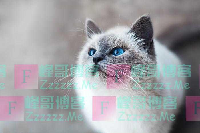 科学家揭秘猫的七种性格类型