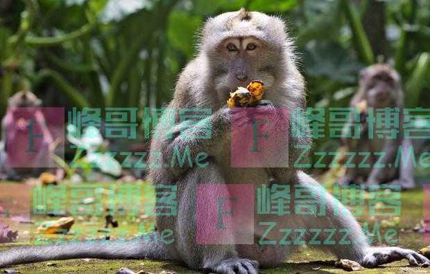 太饿太无聊,巴厘岛猴群大闯民宅抢食物