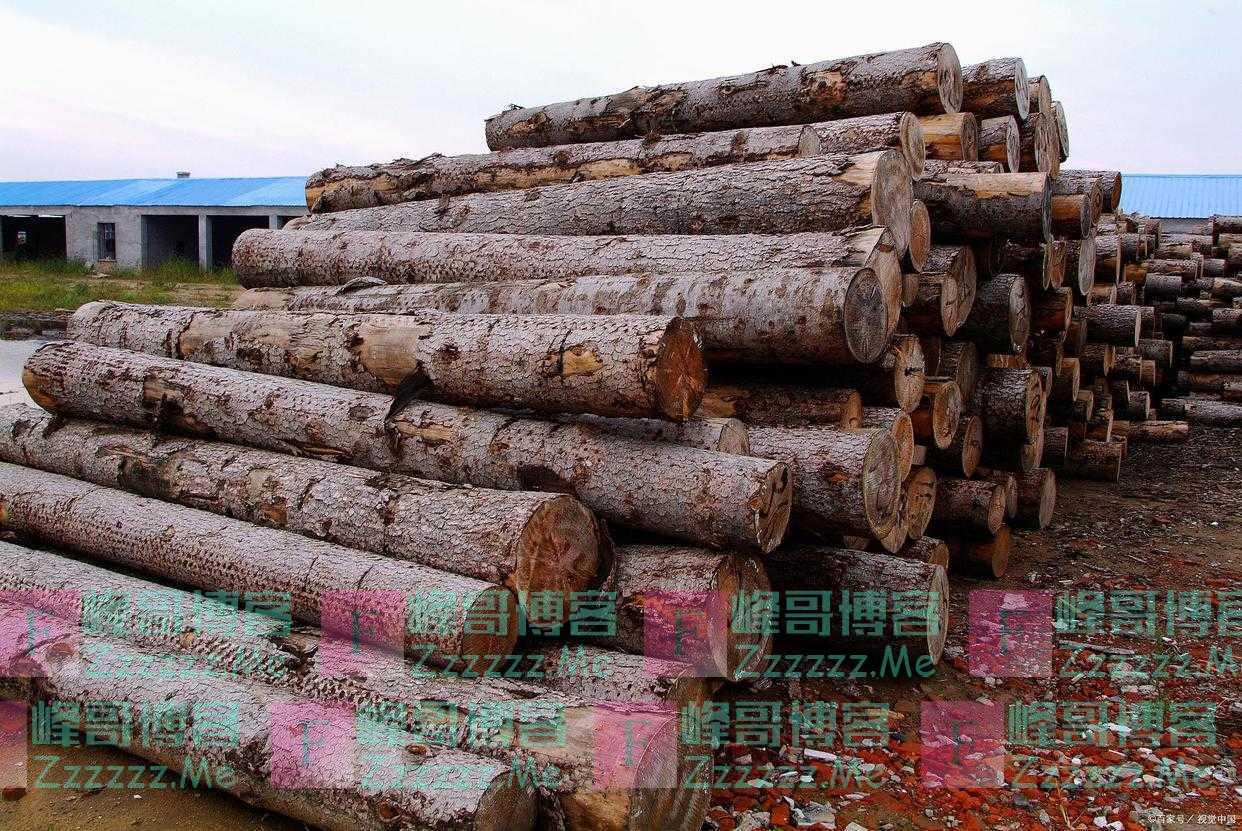 越南木材及木制品出口欧盟市场取得可观成绩