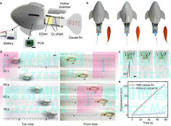 中外学者造出超强液态金属人工肌肉 伸展速度可达15毫米每秒