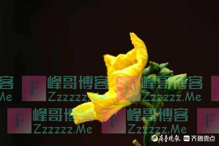 秋风凉丝瓜长,金灿灿花儿黄