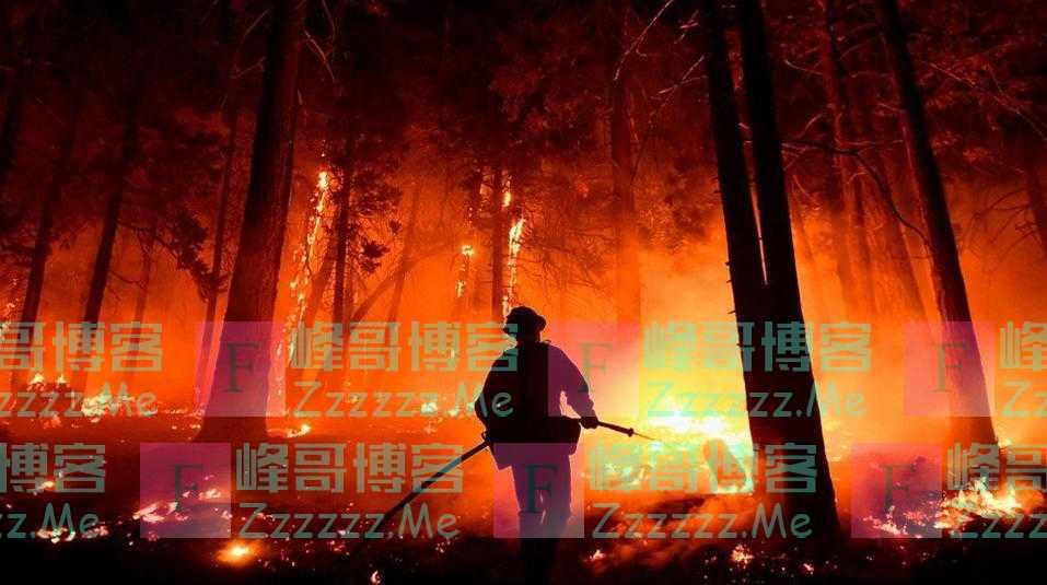美国加州野火持续 世界上最大的树面临威胁