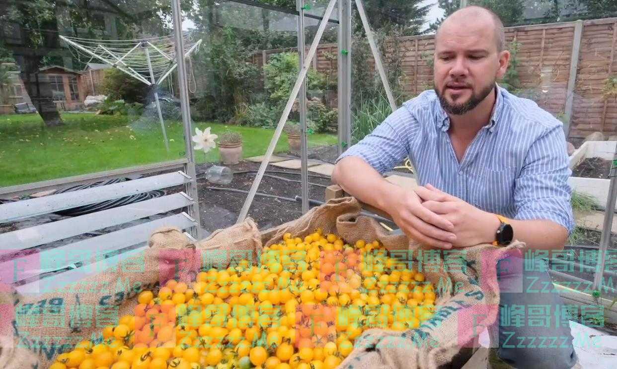 英国男子在一个架子上种出839个圣女果 创世界纪录