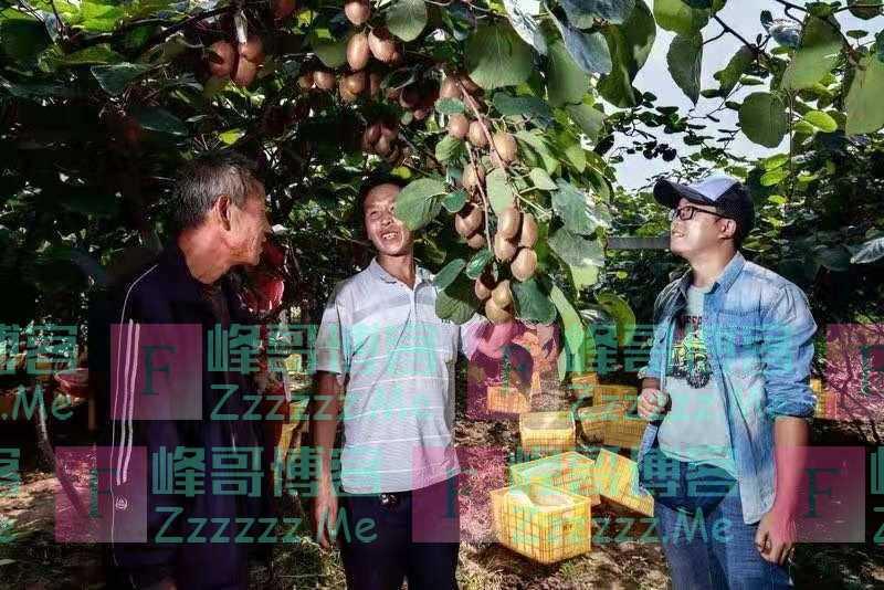 """百果园:""""水果匠人""""四个维度做好水果"""