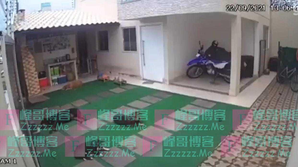 巴西4只在庭院里睡觉的宠物狗遭蜂群袭击 2只被蛰死