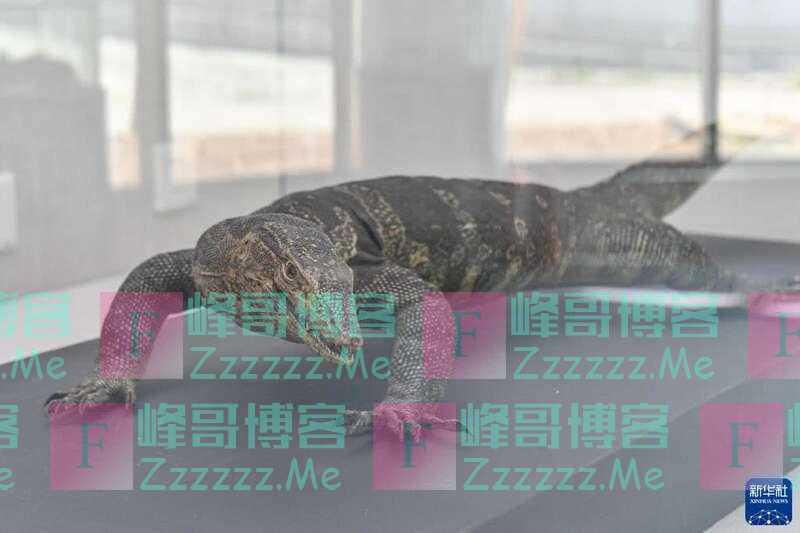 世界动物日:走进海南鹦哥岭动植物博物馆